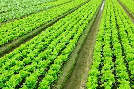 Fertilizer Application Water Filter & Purification system